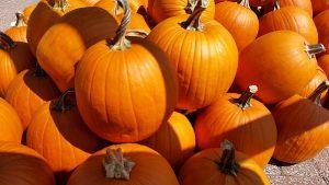 Pumpkins in Bradenton and Sarasota